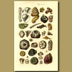 Barnacle And Other Shells