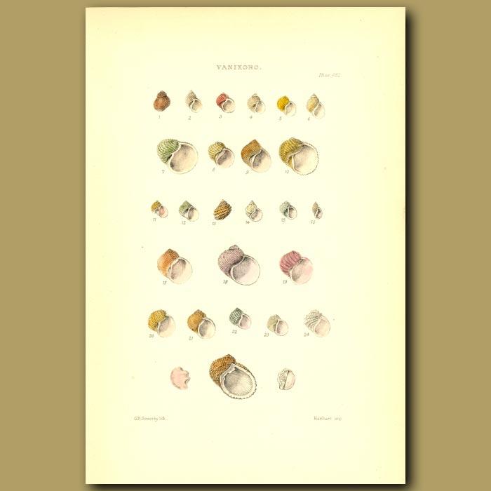 Antique print. Vanikoro Shells