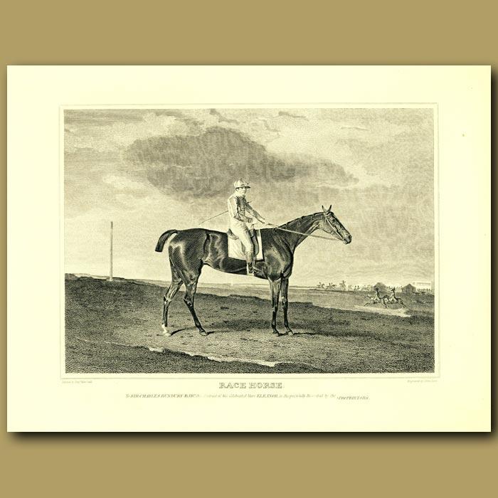 Antique print. Race Horse