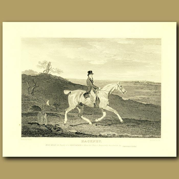 Antique print. Hackney Horse