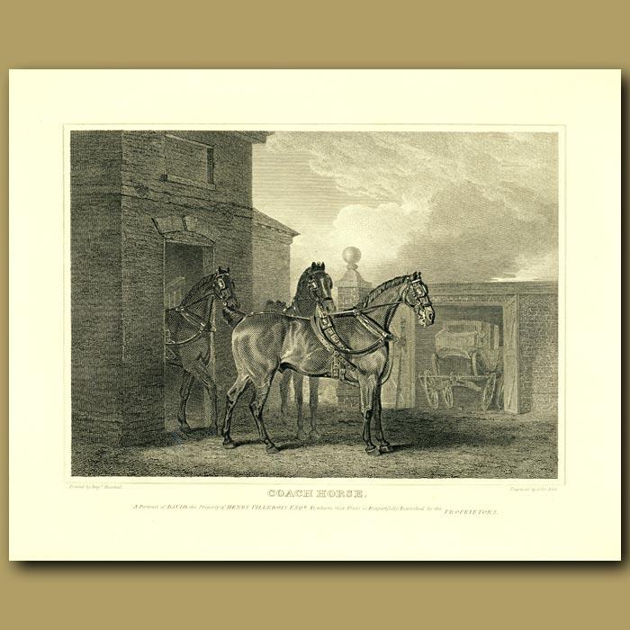 Antique print. Coach Horse