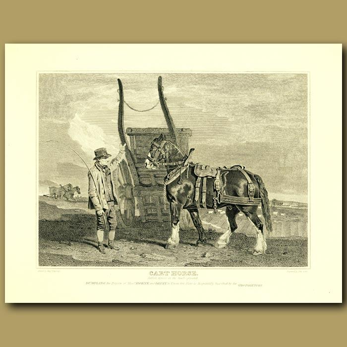 Antique print. Cart Horse