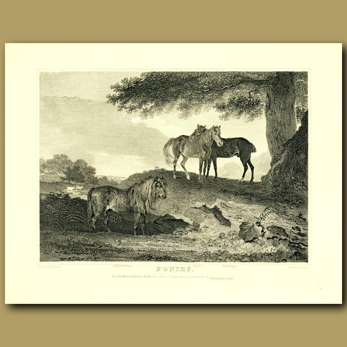 Antique print. Ponies
