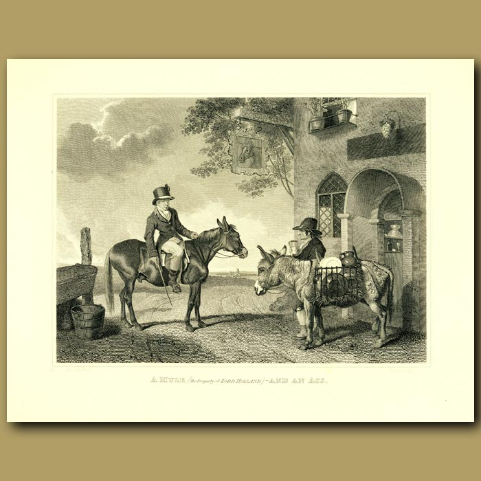 Antique print. Ass And Mule
