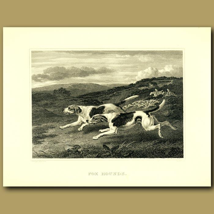 Antique print. Fox Hound