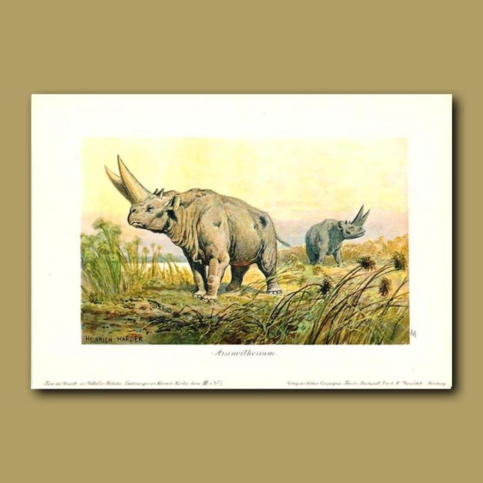 Antique print. Arsinotherium