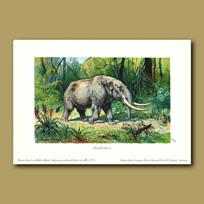 Antique print. Mastodon