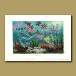 Sea Lilies (Crinoids)