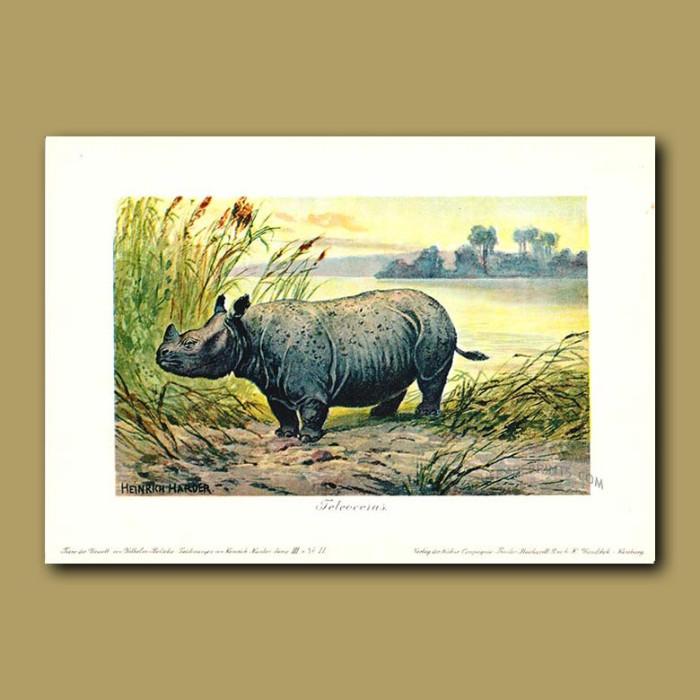 Antique print. Teleoceras (Prehistoric Rhinoceros)