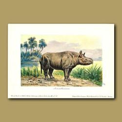 Aceratherium (Prehistoric Rhinoceros)
