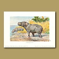 Metamynodon (Prehistoric Hippo)