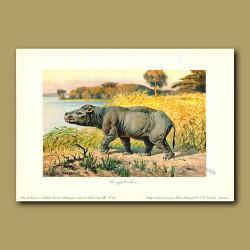 Coryphodon - large browsing mammal