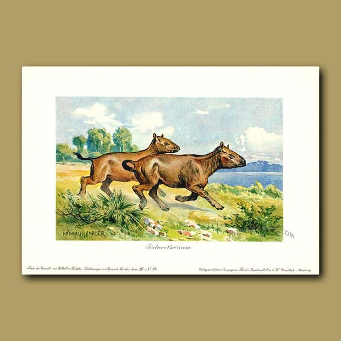 Antique print. Palaeotherium -  a tapir-like animal