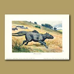 Phenacodus - early, primitive ungulate
