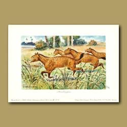 Mesohippus - early horse