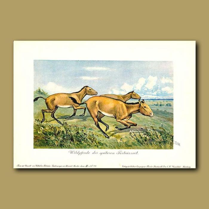 Antique print. Wild Horse
