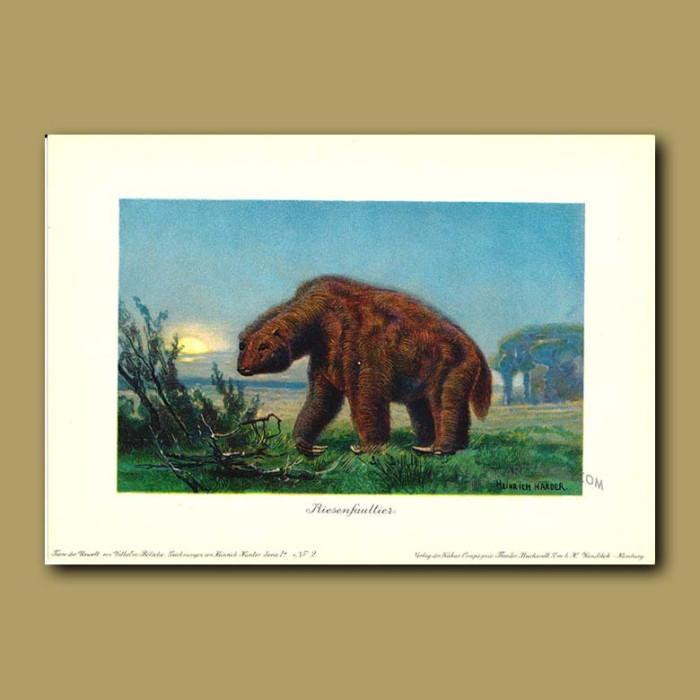 Antique print. Giant Ground Sloth