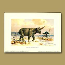 Elasmotherium (source of legend of unicorn)