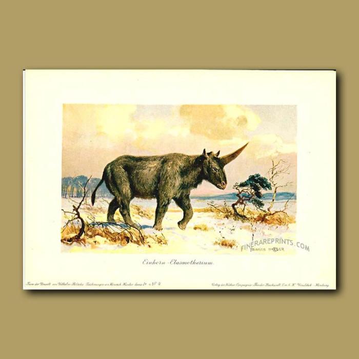 Antique print. Elasmotherium (source of legend of unicorn)