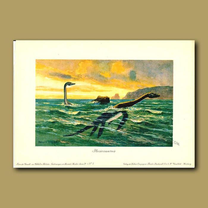Antique print. Plesiosaurus
