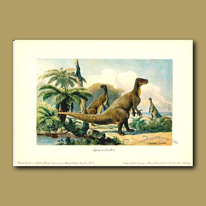 Antique print. Gigantic Iguanadon