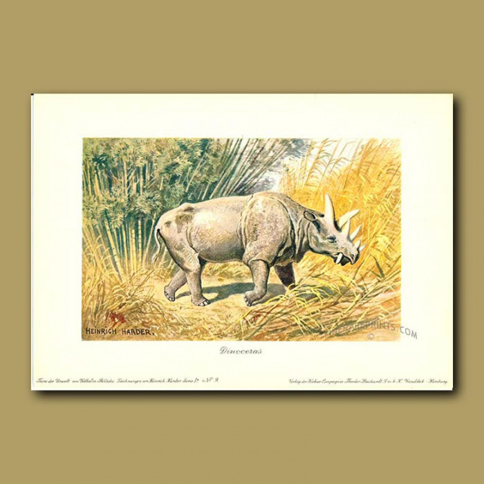Antique print. Uintatherium (Prehistoric Rhinoceros)