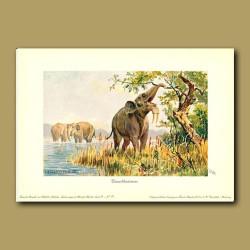 Deinotherium (Prehistoric Elephant)