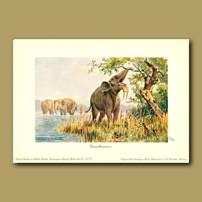 Antique print. Deinotherium (Prehistoric Elephant)