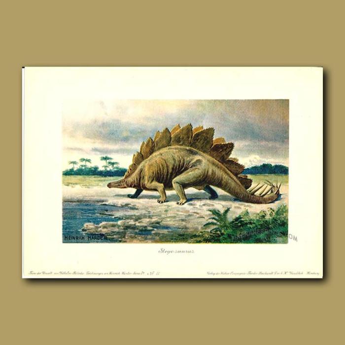 Antique print. Stegosaurus