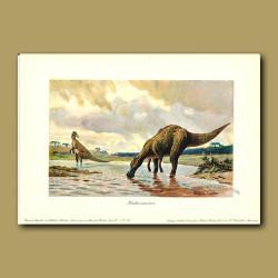 Hadrosaudrid Duck-billed dinosaur