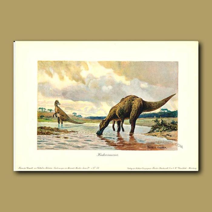Antique print. Hadrosaudrid Duck-billed dinosaur