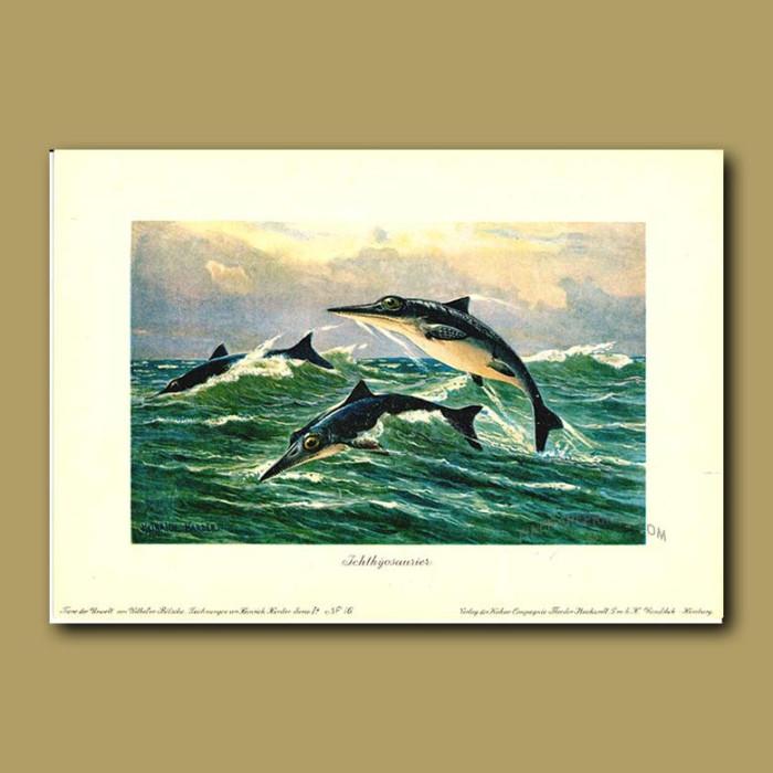 Antique print. Ichthyosaur
