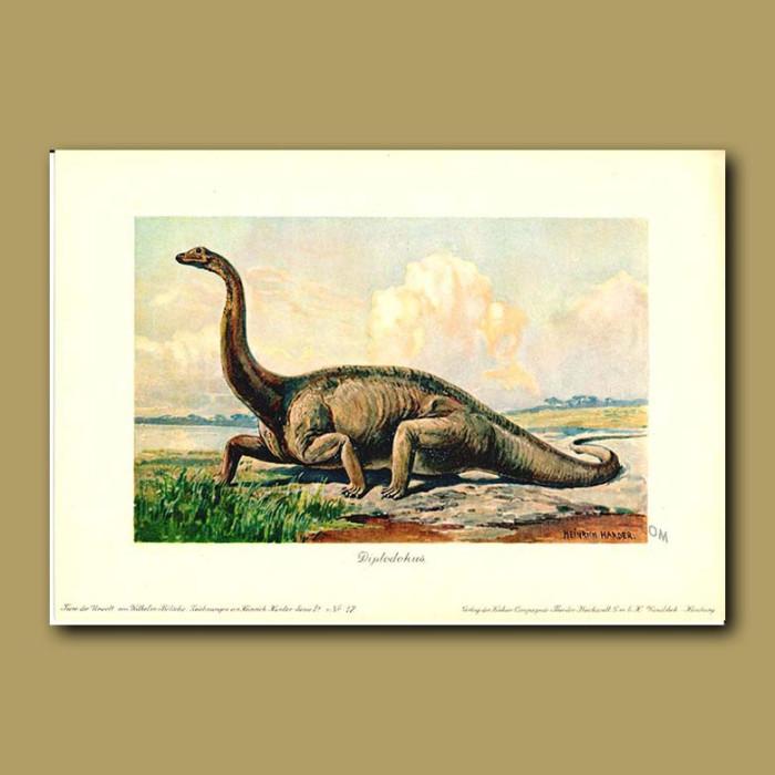 Antique print. Diplodocus