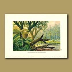 Ancient Hardwood Forest and Archegosaurus Dinosaur