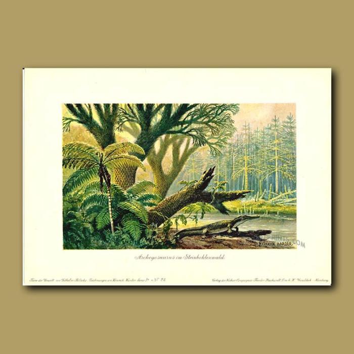 Antique print. Ancient Hardwood Forest and Archegosaurus Dinosaur