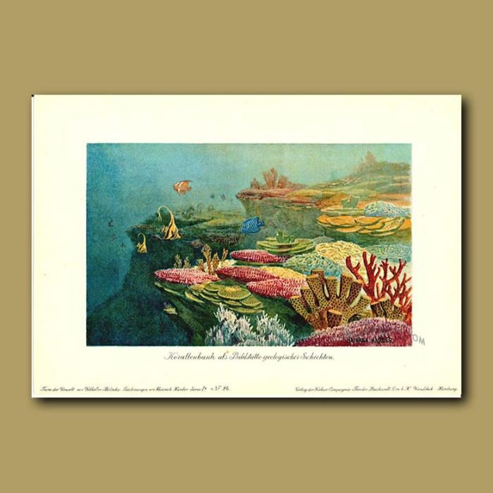 Antique print. Coral Reef