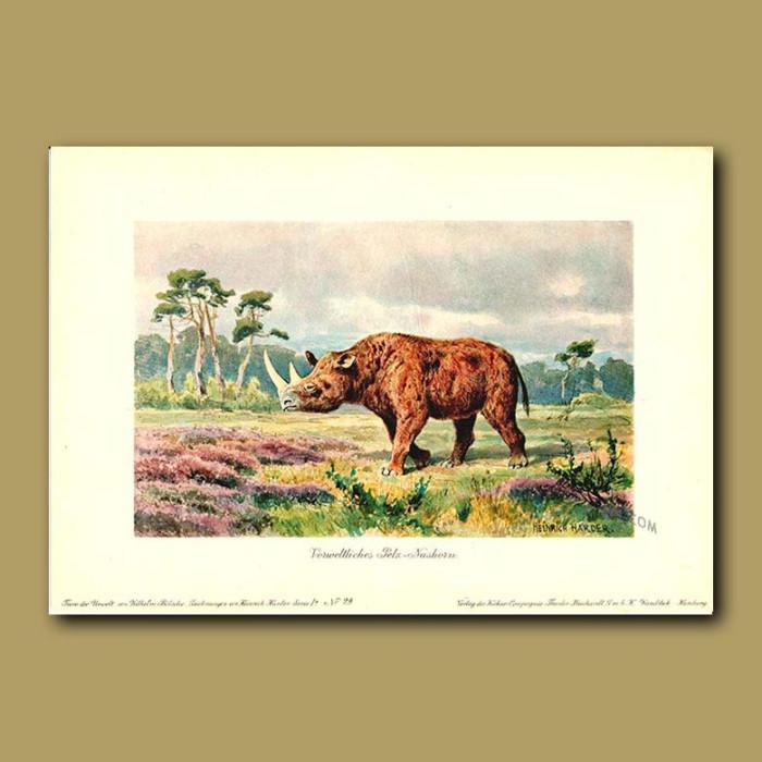 Antique print. Woolly Rhinoceros