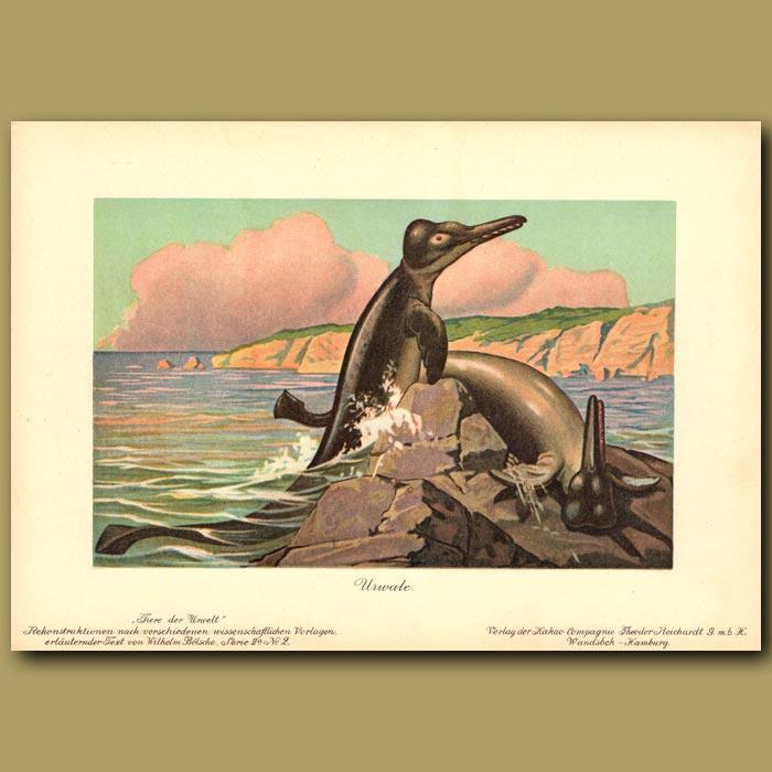 Antique print. Basilosaurus