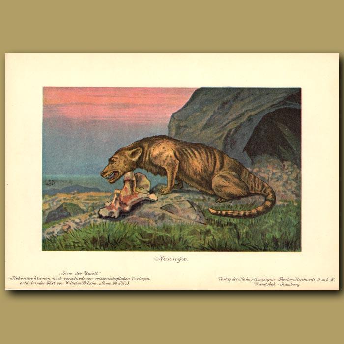 Antique print. Mesonyx