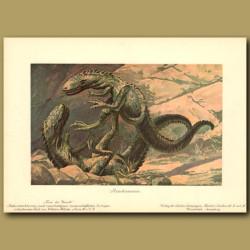 Predatory Dinosaurs