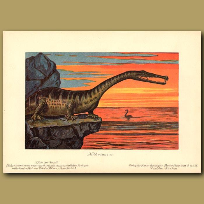 Antique print. Nothosaurus