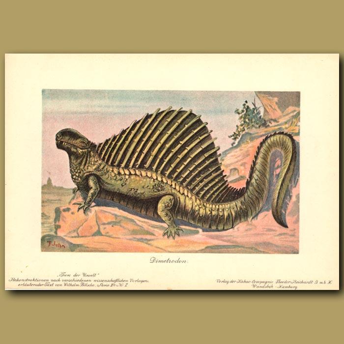 Antique print. Dimetrodon