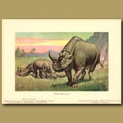 Megacerops (Prehistoric Rhinoceros)