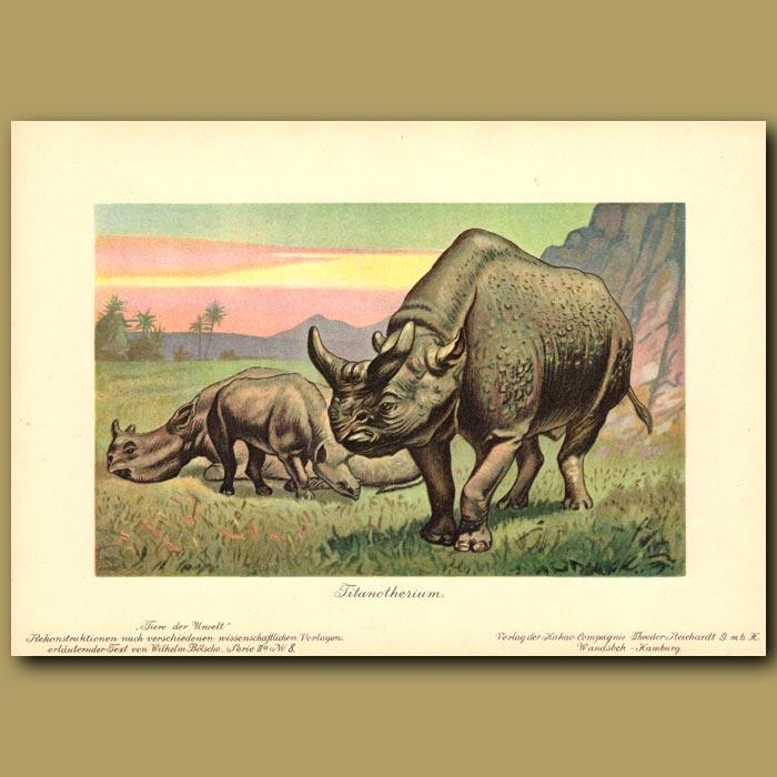 Antique print. Megacerops (Prehistoric Rhinoceros)