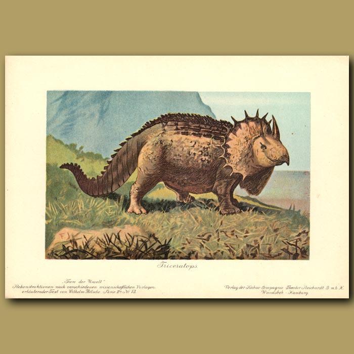 Antique print. Triceratops