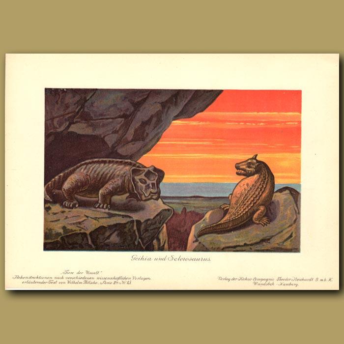 Antique print. Geikia and Sclerosaurus dinosaurs