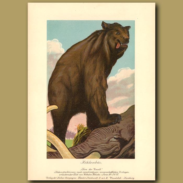 Antique print. Prehistoric Cave Bear