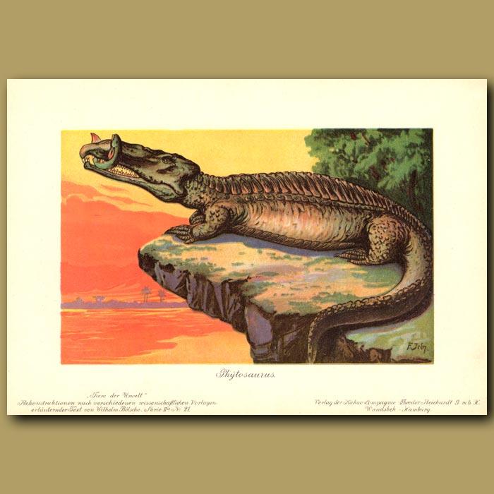Antique print. Phytosaurus