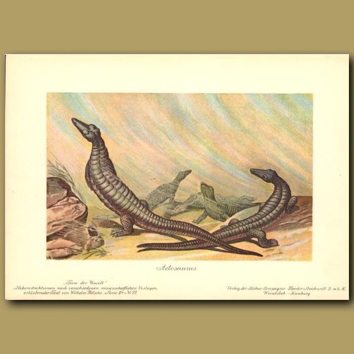 Antique print. Aetosaurus