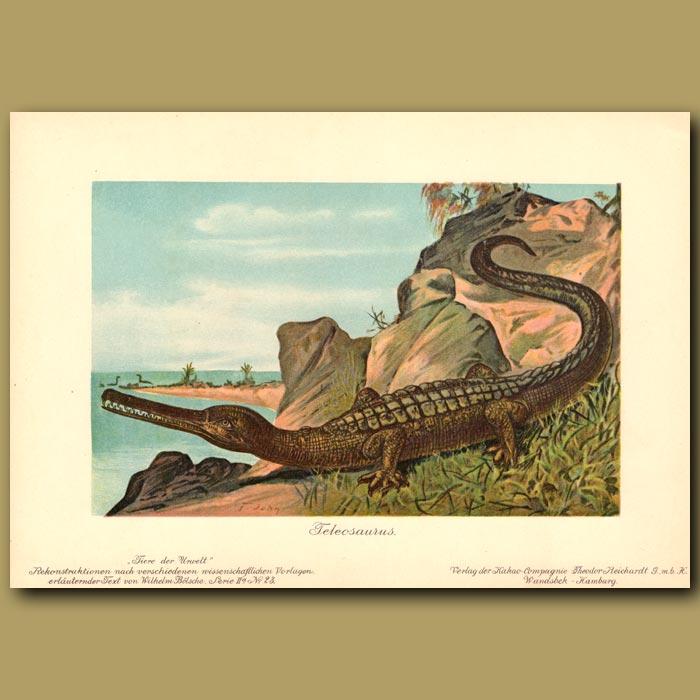 Antique print. Teleosaurus